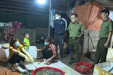 Bắt quả tang cơ sở bơm tạp chất hàng tấn tôm cho các nhà hàng Hà Nội mỗi tháng